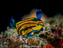 Squats!