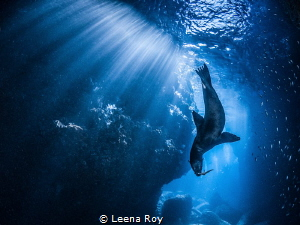 Playing in the light by Leena Roy