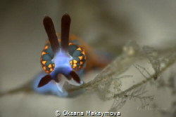 Nudibranch Trinchesia sp. by Oksana Maksymova