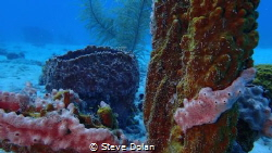"""Coral Garden"" Taken in Carlisle bay, Barbados with Olymp... by Steve Dolan"
