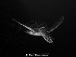 Flying Turtle by Tim Steenssens