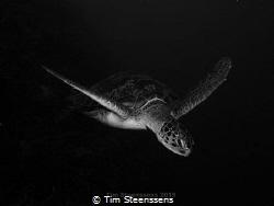 Flying Turtle by Tim Steenssens
