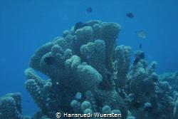Marine Life by Hansruedi Wuersten