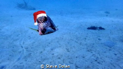 Merry Christmas Underwater Photographers by Steve Dolan