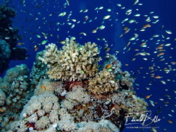 Sea coral every where by Eduard Bello