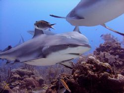 """Cara a Cara"", Roatan, Bay Islands. Fuji F810, ambient li... by Jennifer Temple"