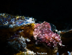 Hunting Cuttlefish!!! by George Touliatos