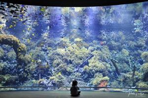 daughter enjoys the Antwerp zoo aquarium by Pieter Firlefyn