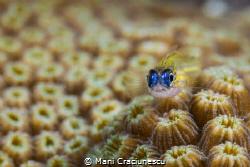 The eyes by Mani Craciunescu
