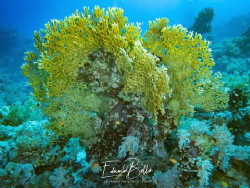 Great coral view by Eduard Bello