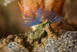 Worm (dutch 3 3kantige kokerwormen) by Eduard Bello
