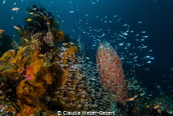 wonderful reef with loads of fish in Triton Bay - West Papua by Claudia Weber-Gebert