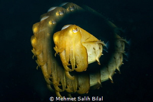 Cuttlefish with a creative filter. by Mehmet Salih Bilal