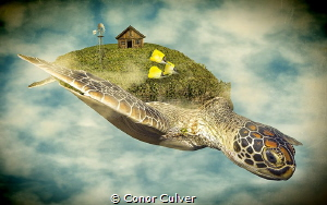 """""""Turtle Farm"""" part of my Underwater Surrealism body of wo... by Conor Culver"""