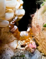 Sexy Shrimp!!! by George Touliatos
