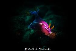 nudibranch by Vladimir Chubenko