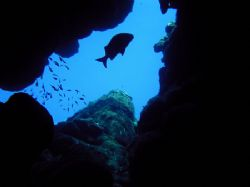 Silent Silhouette - Roatan, Bay Islands by Lisa Armstrong
