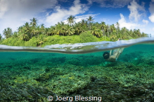 seagrass meadow by Joerg Blessing