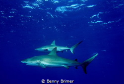Sharks passing by by Benny Brimer