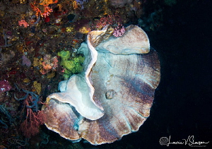Coral In A Cave/Photographed with a Tokina 10-17 mm fishe... by Laurie Slawson