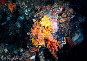 Colorful Corals in a Cave/Photographed with a Tokina 10-1... by Laurie Slawson