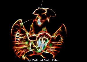 Rhinopia eschmeyeri. by Mehmet Salih Bilal