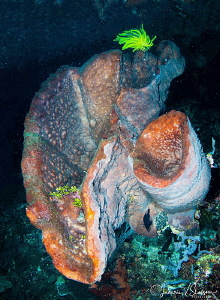 Large Corals in a Cave/Photographed with a Tokina 10-17 m... by Laurie Slawson
