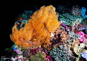 Coral Reef/Photographed with a Tokina 10-17 mm fisheye le... by Laurie Slawson