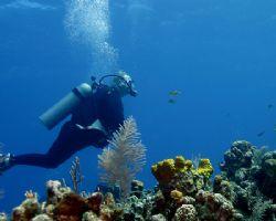 Terrifying reef encounter! Canon digital EOS, SB105 by Michael Canzoniero