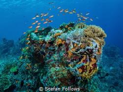 """""""No water, no life. No blue, no green."""" – Sylvia Earle ... by Stefan Follows"""