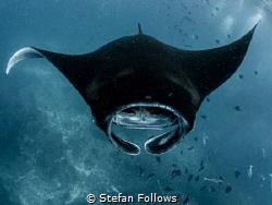 Planktonfest ... nom nom nom  Manta Ray - Mobula alfred... by Stefan Follows