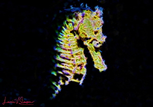 Fractal image of a female common seahorse/Photographed wi... by Laurie Slawson