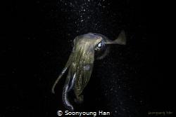 reef squid teammax house reef nightdive by Soonyoung Han