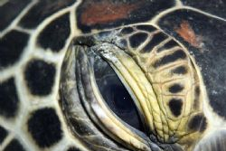 Turtle Eye. Canon 10d with 105mm macro lens. Taken in Bun... by Jaime Wallace