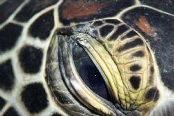 Turtle Eye. Canon 10d with 105mm macro lens. Taken in Bun... by Jaime Wallace