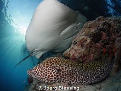 Moray and stingray by Joerg Blessing