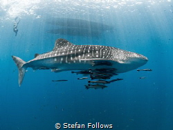 Sidewinder 