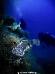 Nudi and divers by Yildirim Gencoglu
