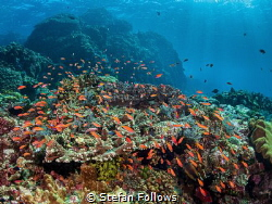 Object of Desire  Gili Mimpang  Bali, Indonesia by Stefan Follows