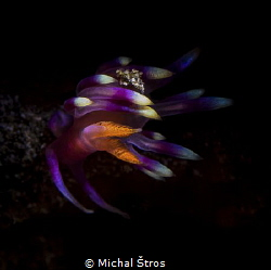 Flabellina exoptata in a strong current by Michal Štros