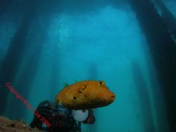 Taking photos ...... another diver with the same image?? by Brad Cox