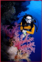 stunning soft corals and diver in the brother islands Red... by Fiona Ayerst