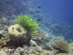 Reef Shot from the Black Reef in the Whitsundays. Taken u... by Brian Mayes