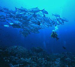 'SCHOOL + ONE' Ingles shoal, Walindi, WNB, PNG. Schooling... by Rick Tegeler