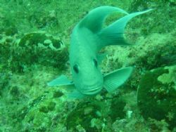 Strong current dive, but our litle friend really likes th... by Santiago Mercado