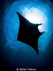 Serial Offender
