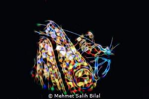 Snake eel with a shrimp. by Mehmet Salih Bilal