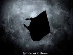 Moon Dreams  Manta Ray - Mobula alfredi  Manta Point,... by Stefan Follows