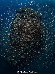 Bewilders Sail Rock, Thailand by Stefan Follows