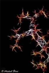 Gorgonians - a fractal image by Michal Štros